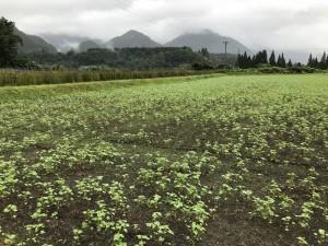 プロジェクト鳴子CSA in 仙台「やまの畑とまちの食卓をつなごう 」参加者募集!